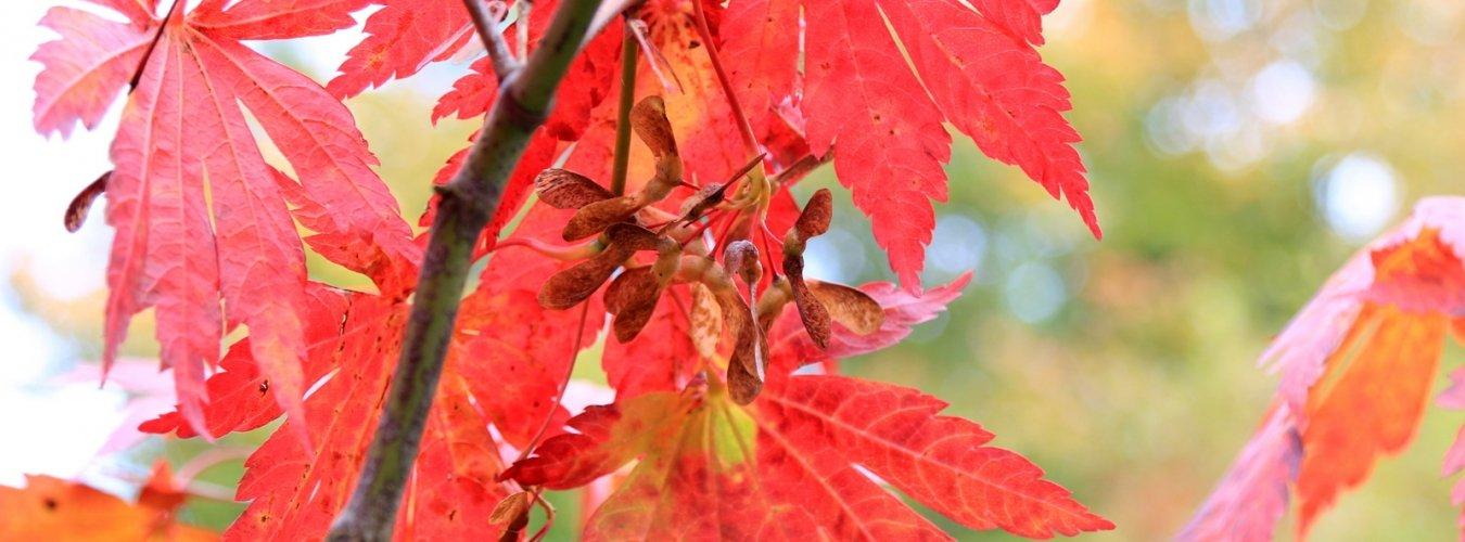 Geselecteerd op bloei, bladvorm, herfstkleur of allemaal