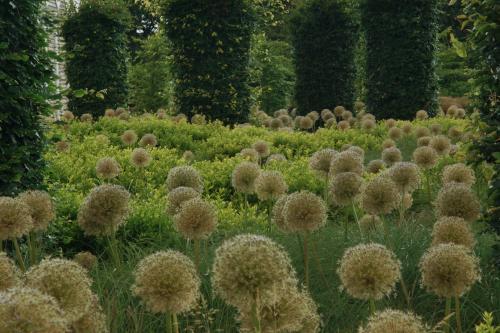 Allium spp. - Wiecher Huisman
